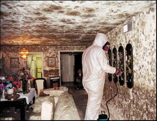 Toxic Mold Syndrome Can Certainly Present Itself During Many Different  Approaches. A Variety Of The Symptoms Associated With Toxic Mold Embrace  Things Like ...